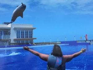zach the dolphin